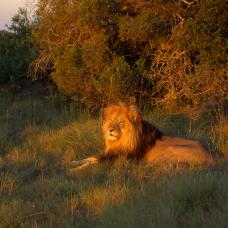 South Africa Game Reserve