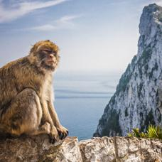 Monkey on the rock of Gibraltar